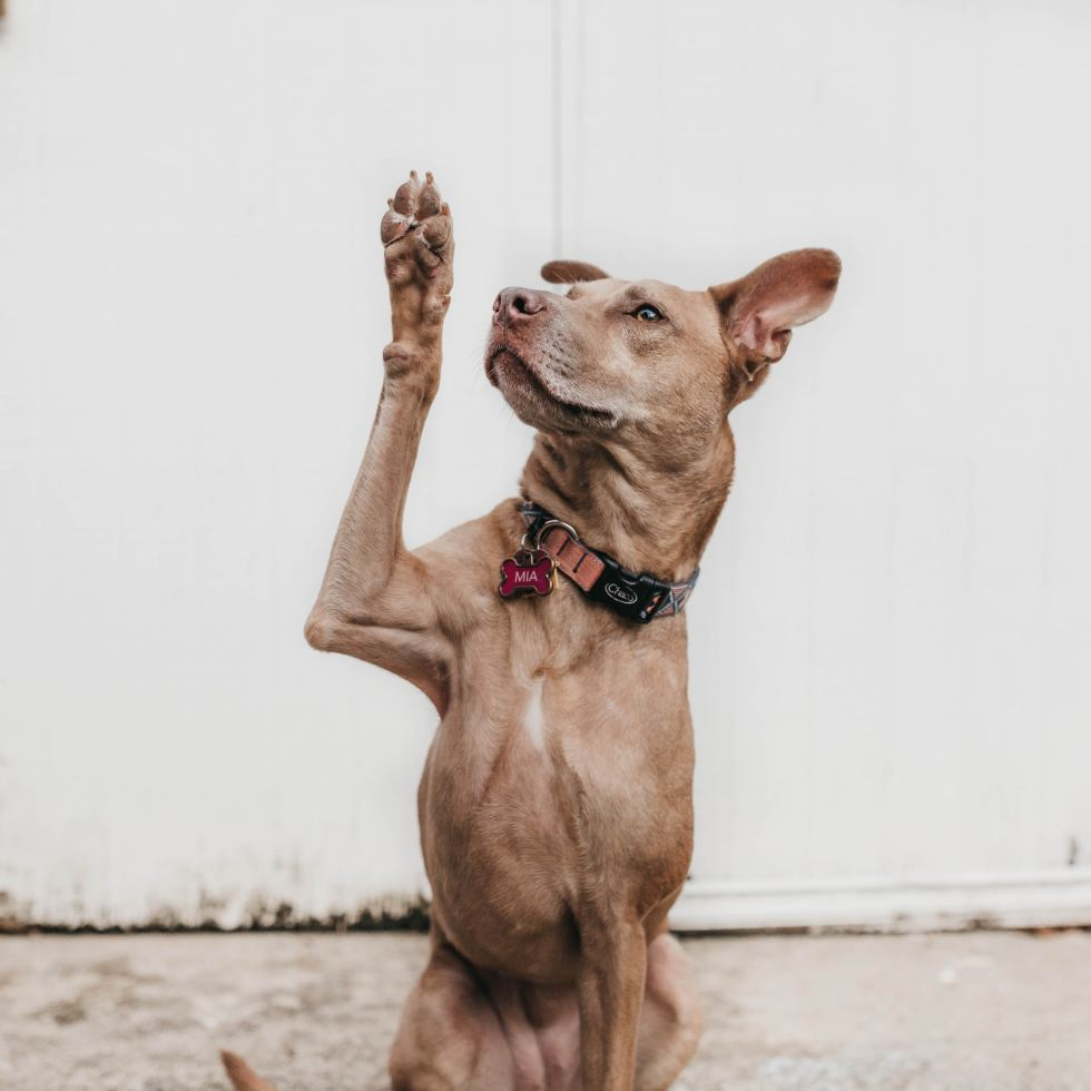 Dog Photo by Camylla Battani on Unsplash